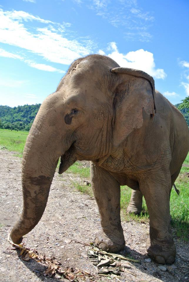 Jokia elephant