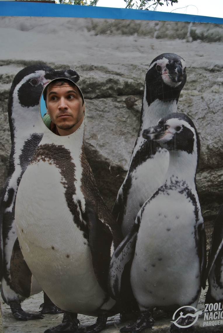 sancristobalpenguins