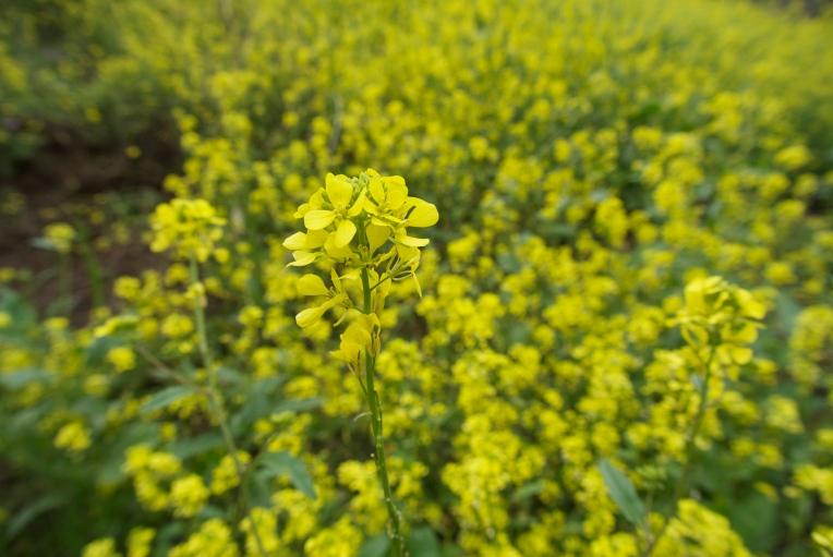 sancristobalwildflowers